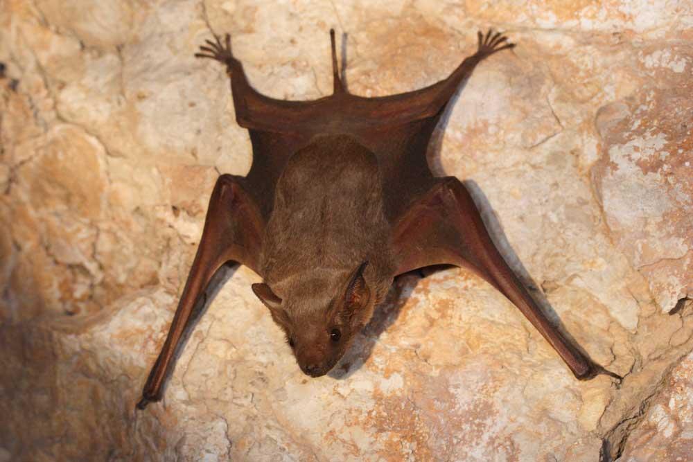 Nietoperze to fascynujące stworzenia. Warto zobaczyć niektóre z najdziwniejszych gatunków