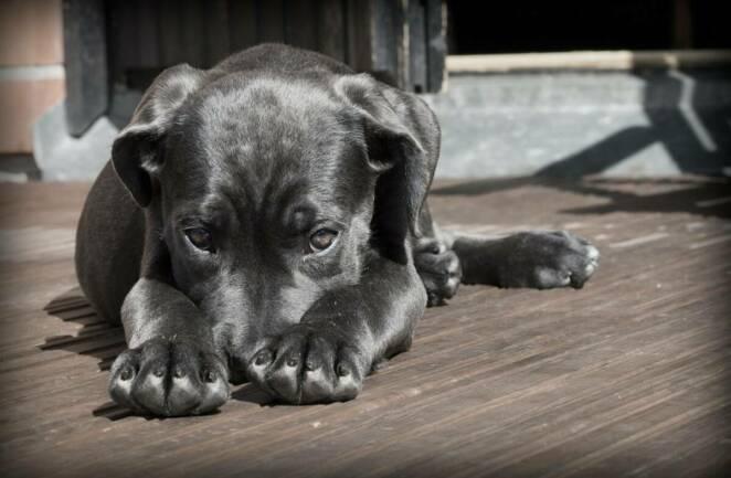 Zwierzęta domowe też przenoszą zarazki. Niektóre choroby odzwierzęce mogą być groźne dla zdrowia