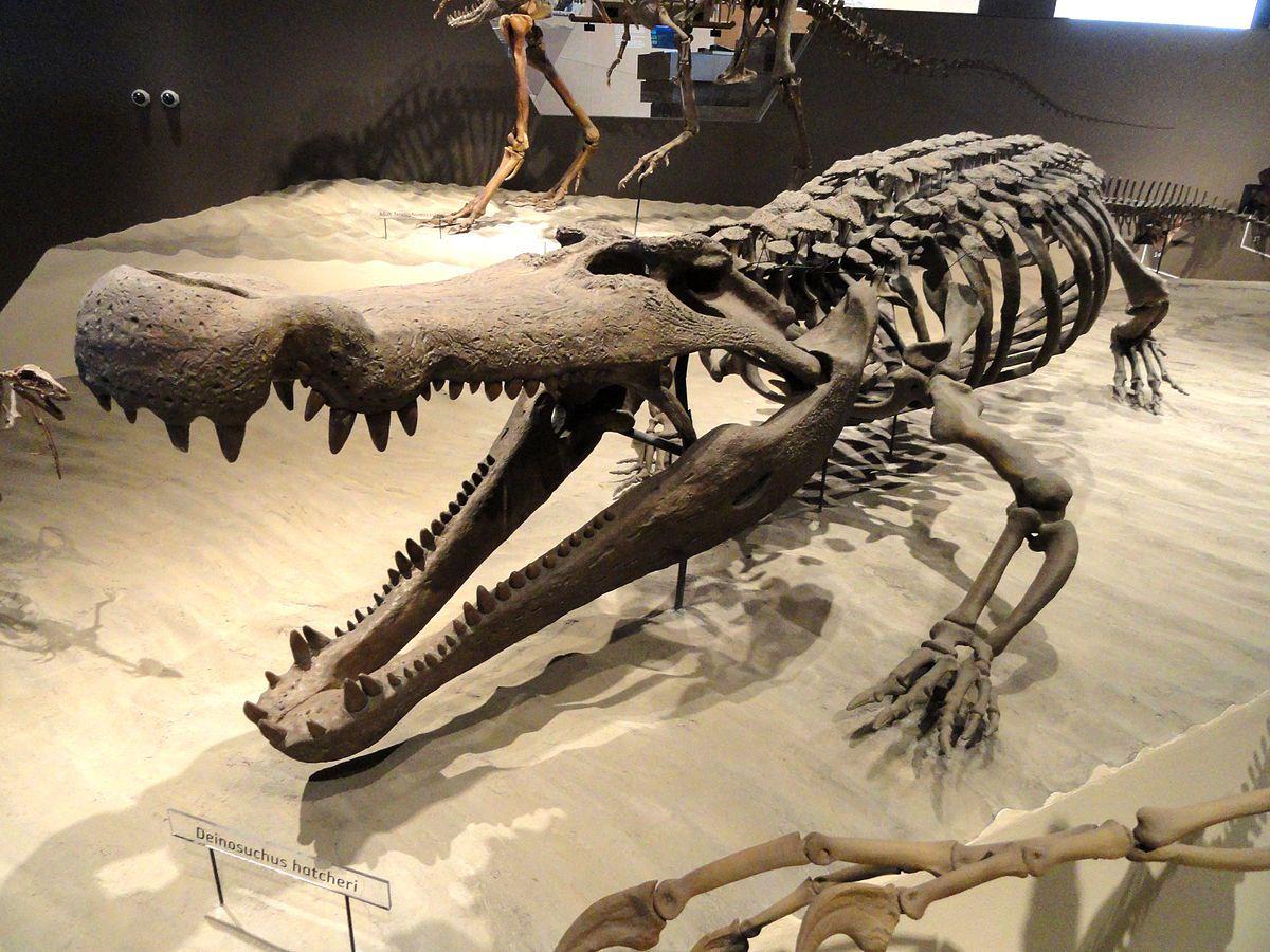 Deinozuch był gigantycznym krokodylem, który siał postrach nawet wśród największych dinozaurów