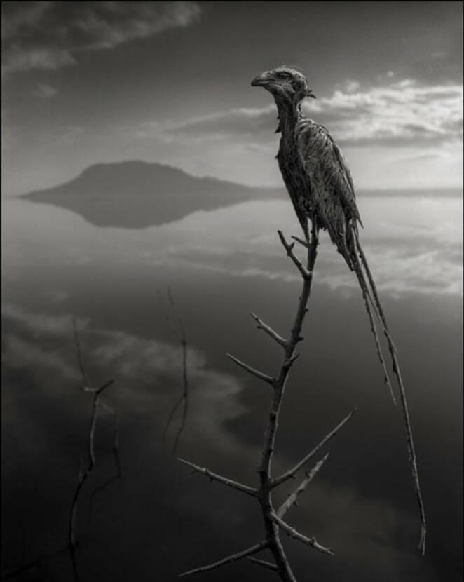 Jezioro Natron