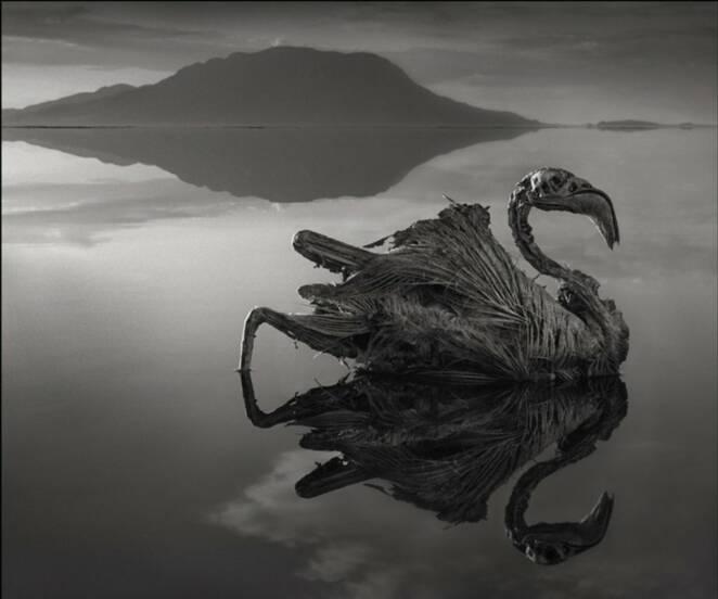 Jezioro Natron zamienia zwierzęta w kamienne posągi. To efekt niezwykłych właściwości wody