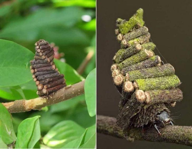 20 oszałamiających fotografii, które pokazują, że dzięki naturze zaczynamy wierzyć w magię