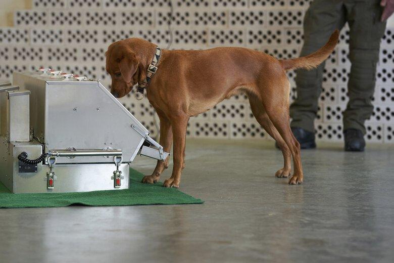 Psy są w stanie wykryć koronawirusa w próbkach śliny ze zdumiewającą dokładnością
