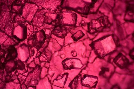 Ciekawe zdjęcia, które ujawniają, jak wyglądają zwyczajne rzeczy pod mikroskopem
