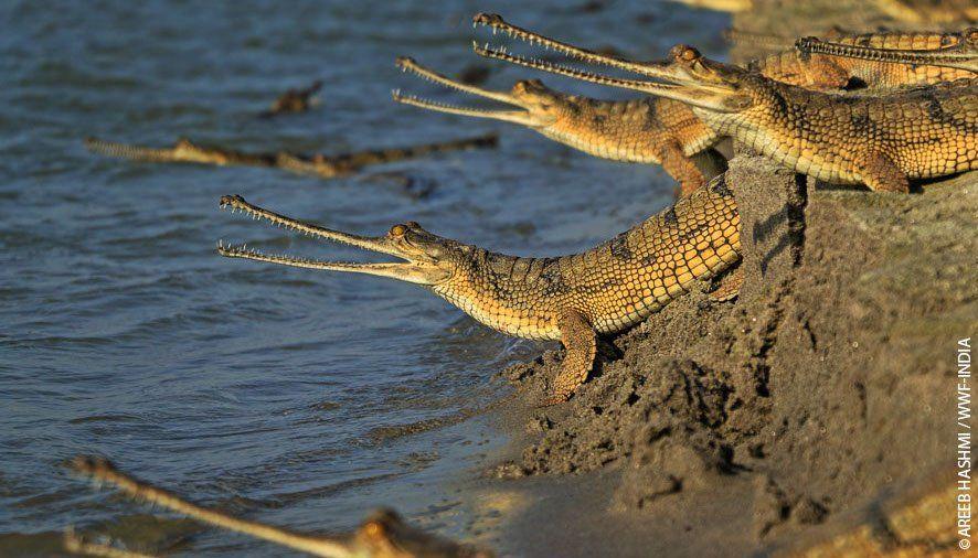 Opieka nad dziećmi w wykonaniu tego krokodyla wkracza na zupełnie nowy poziom