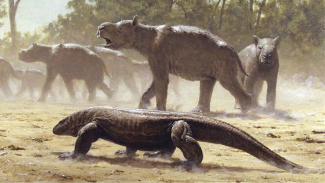 Przerażający 7-metrowy jaszczur z aborygeńskich legend i mitów. Megalania istniała naprawdę