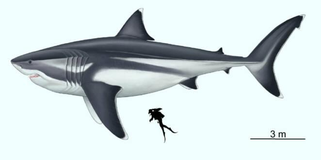 Paleontolodzy ujawniają, jakie mogły być prawdziwe proporcje przerażającego megalodona