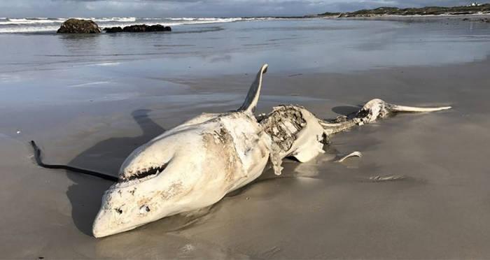 Okazuje się, że ocean zamieszkuje stworzenie, które sieje postrach nawet wśród rekinów ludojadów