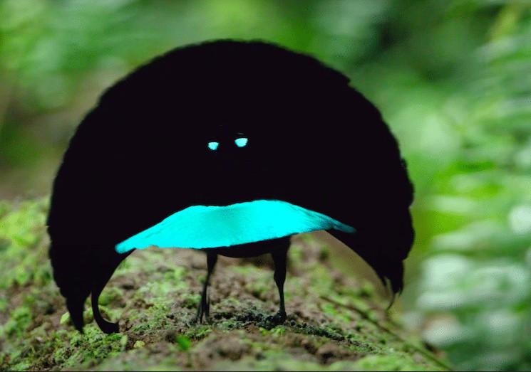 7 gatunków ptaków, które wyglądają tak niezwykle, że mogłyby uchodzić za przybyszy z innej planety