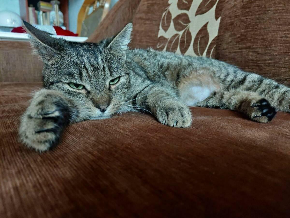 Powolne mruganie do twojego kota może wzmocnić z nim więź, a badania właśnie to potwierdziły