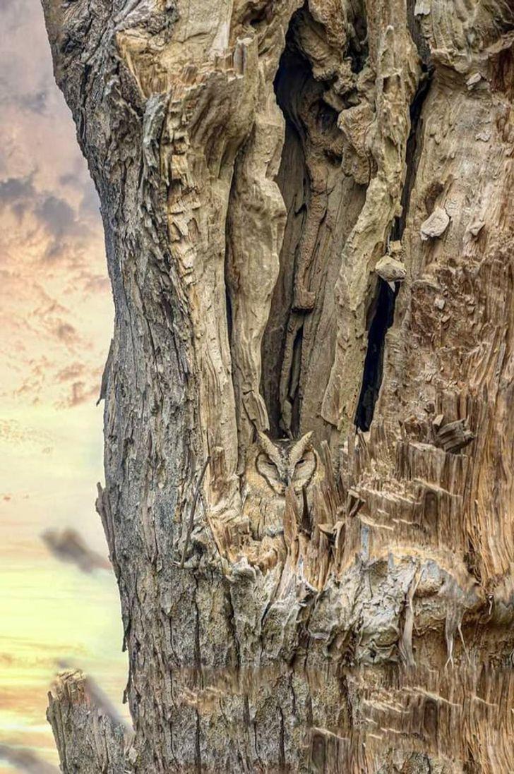 20 niespotykanych zdjęć Matki Natury, która rzuciła wyzwanie stereotypom