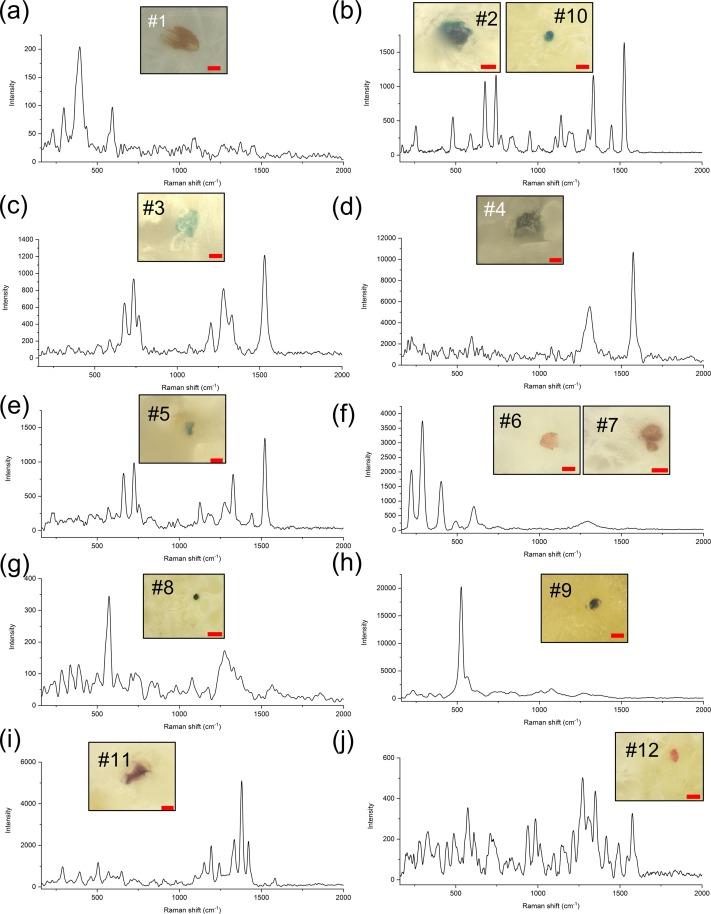 Naukowcy znaleźli cząsteczki mikroplastiku w ludzkich łożyskach. Wyniki badania niepokoją
