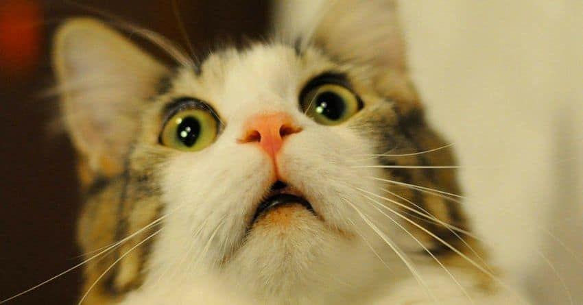 Dlaczego koty nagle zaczynają się wpatrywać w ściany lub pustą przestrzeń?