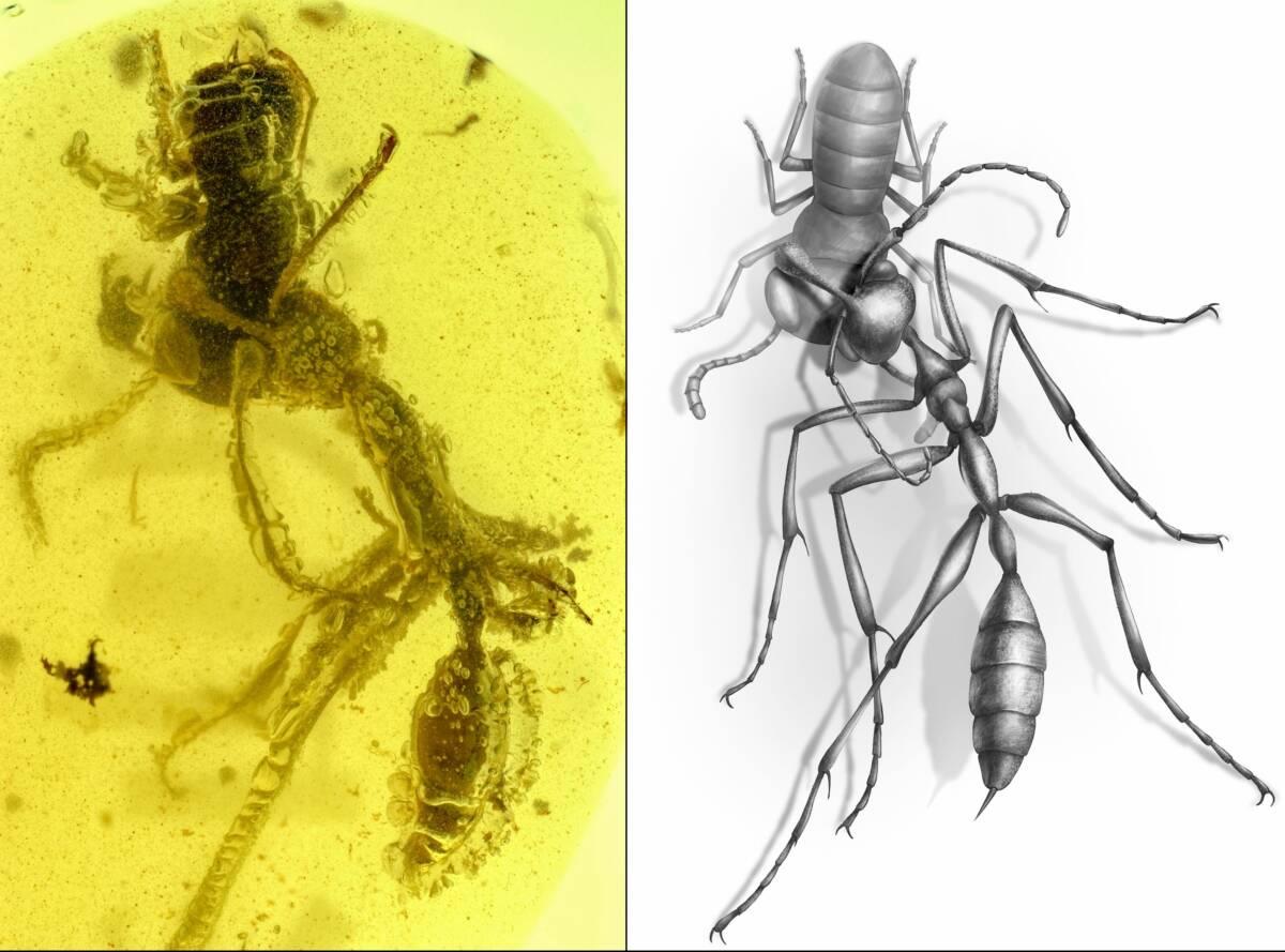 """Prehistoryczna """"piekielna mrówka"""" została uwięziona w bursztynie na ponad 99 milionów lat"""