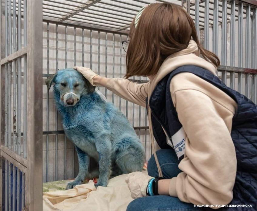 O co właściwie chodzi z niebieskimi psami wędrującymi po ulicach rosyjskiego miasta?