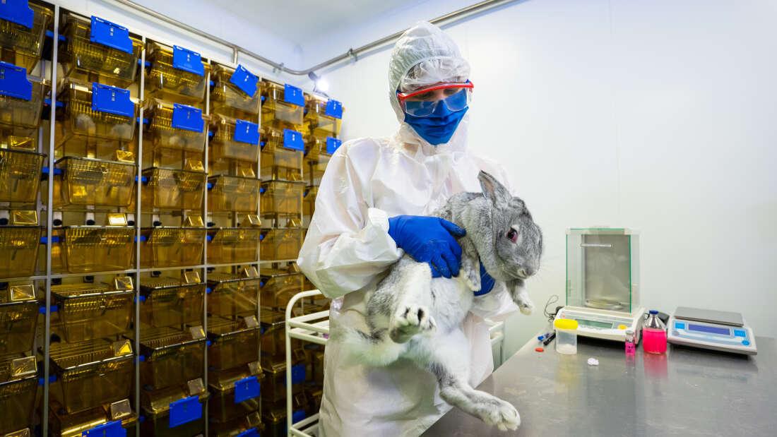 Powstała szczepionka przeciwko COVID-19 dla zwierząt. Czy właściciele powinni szczepić pupile?