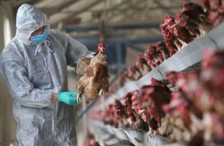 Szczep ptasiej grypy H5N8 znaleziono w 46 krajach. Naukowcy ostrzegają przed kolejną pandemią