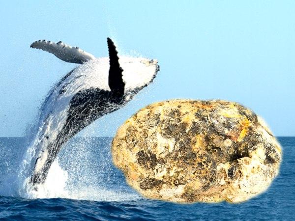 """Czym właściwie jest ambra i dlaczego wielorybie """"wymiociny"""" są tak cenne?"""