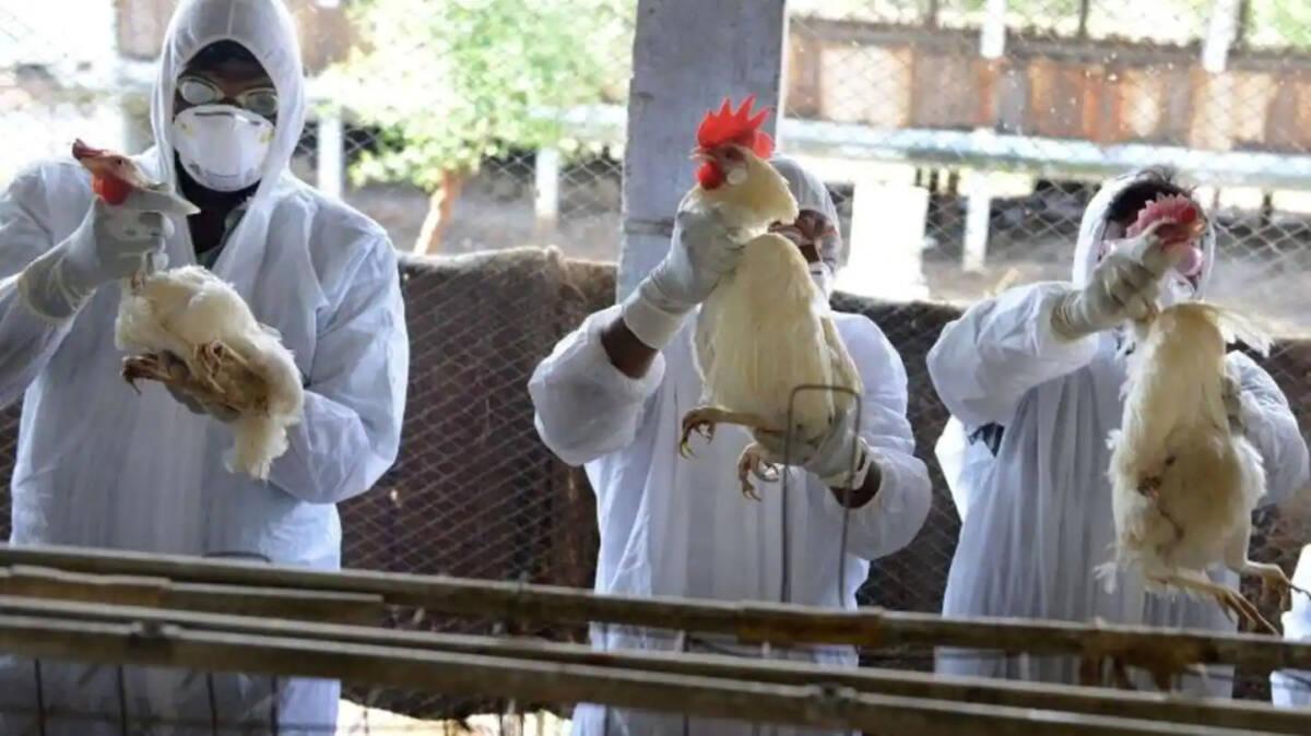 Pierwszy przypadek ptasiej grypy H10N3 u człowieka został zgłoszony w Chinach