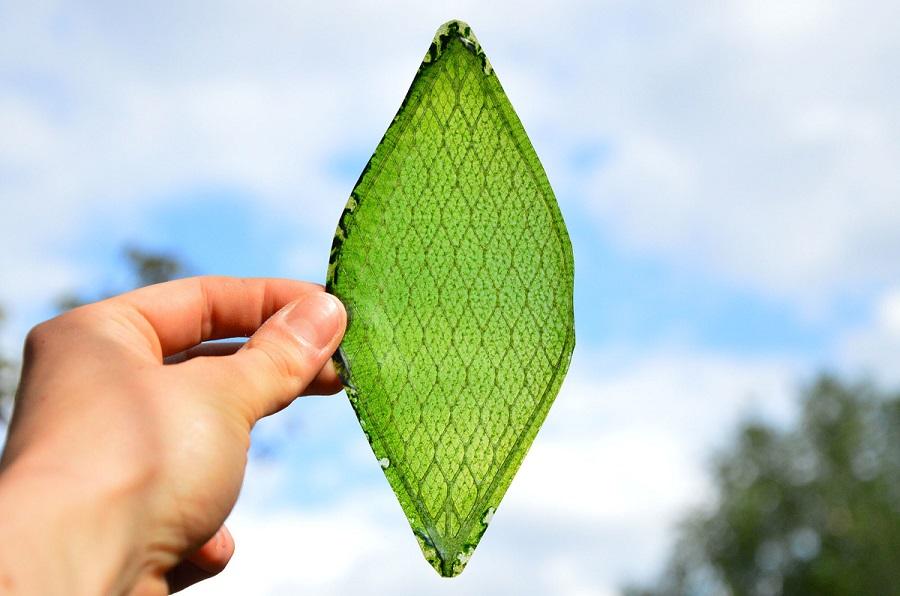 Syntetyczny liść biologiczny może wytwarzać tlen. Żyje i oddycha zupełnie jak naturalny