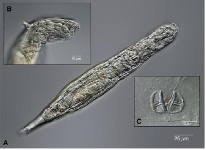 Naukowcy przywrócili do życia stworzenia zamrożone w wiecznej zmarzlinie przez 24000 lat