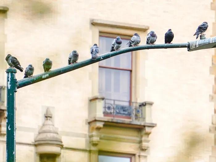 """Grupa """"ptaki nie są prawdziwe"""" to najnowsza teoria spiskowa. Szturmem zdobywa zwolenników"""