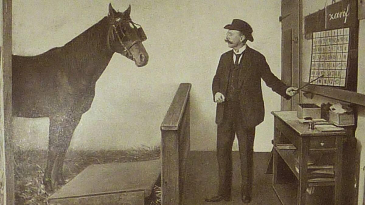 Mądry Hans to koń, który potrafił wykonywać obliczenia matematyczne i mówił po niemiecku