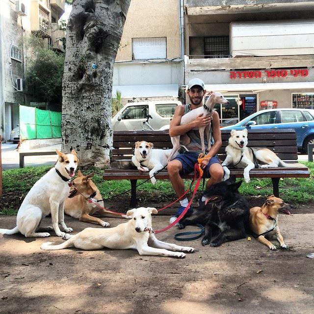 DNA z odchodów będzie wykorzystywane do karania właścicieli, którzy nie sprzątają po psach