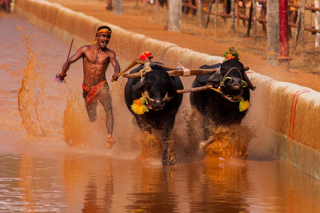 Najdziwniejsze festiwale z całego świata. Uczestnictwo w niektórych z nich jest niebezpieczne