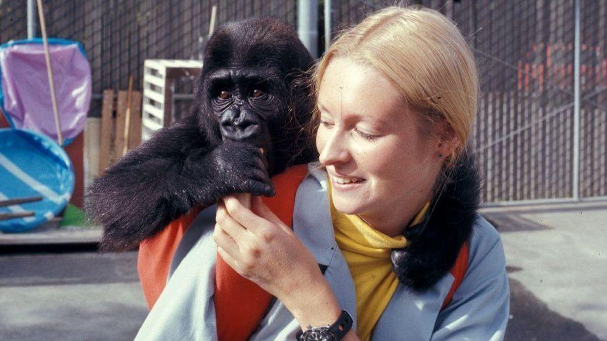 Niesamowita Koko, gorylica, która opanowała język migowy i przyjaźniła się z Robinem Williamsem