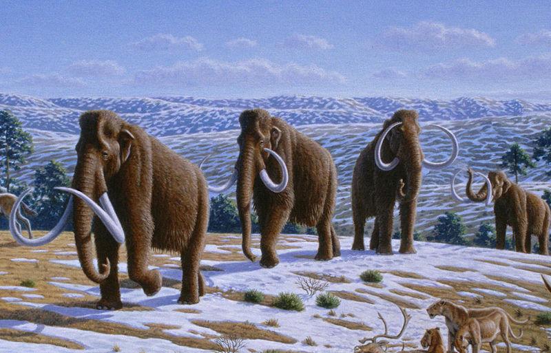 Mamuty będą ponownie wędrować po Ziemi? Firma ogłosiła, że wskrzesi prehistoryczny gatunek