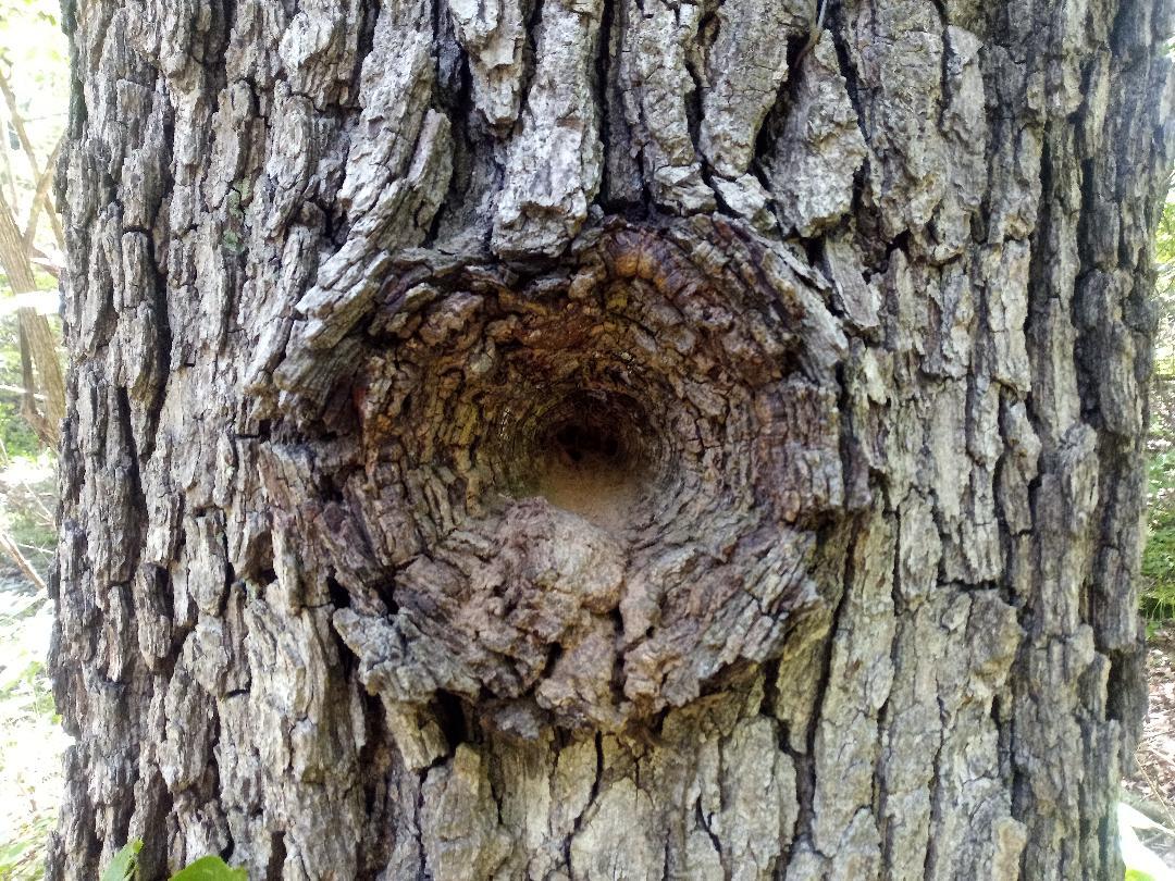 Zdjęcia natury, które mogą cię zaskoczyć. To drobiazgi nadają wyjątkowy charakter